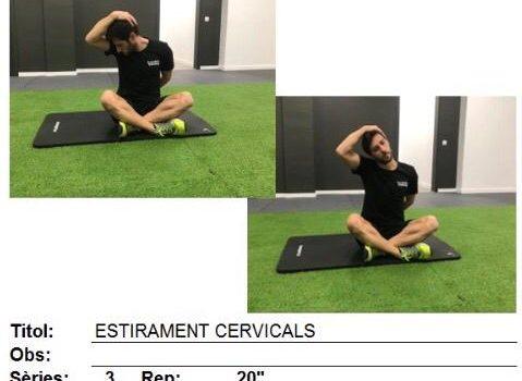 Fisioterapia en casa: Rutina de ejercicios para la dorsalgia.